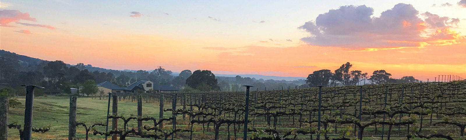 Sunset over the vineyard